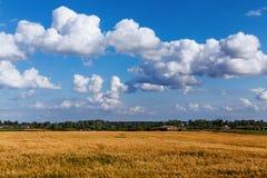Τοπίο με τα όμορφα σύννεφα στο μπλε ουρανό και τα ώριμα αυτιά στον τομέα Στοκ φωτογραφία με δικαίωμα ελεύθερης χρήσης