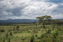 Τοπίο με την ακακία κάτω από τη καταιγίδα στην Αφρική Στοκ Εικόνες