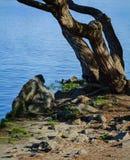 Τοπίο με την εικόνα της πλευράς ποταμών Στοκ φωτογραφίες με δικαίωμα ελεύθερης χρήσης