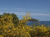Τοπίο με τη σκούπα κοντά σε Arbatax, Σαρδηνία Στοκ φωτογραφίες με δικαίωμα ελεύθερης χρήσης
