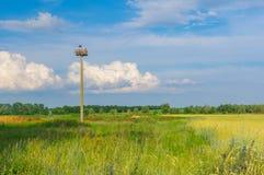 Τοπίο με τη φωλιά ερημιτών πελαργών σε έναν μόνο πόλο ενάντια στον μπλε ουρανό βραδιού Στοκ Εικόνες