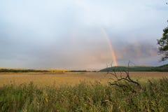 Τοπίο με τον άγριο τομέα, το δραματικούς ουρανό και το ουράνιο τόξο Στοκ εικόνα με δικαίωμα ελεύθερης χρήσης