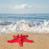 Τοπίο με τον αστερία στην αμμώδη παραλία Στοκ φωτογραφίες με δικαίωμα ελεύθερης χρήσης
