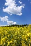 Τοπίο με τον κίτρινο τομέα canola Στοκ εικόνες με δικαίωμα ελεύθερης χρήσης