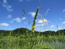 Τοπίο με τον όμορφους ουρανό και το λουλούδι Στοκ φωτογραφία με δικαίωμα ελεύθερης χρήσης