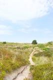 Τοπίο με τους αμμόλοφους Στοκ φωτογραφία με δικαίωμα ελεύθερης χρήσης