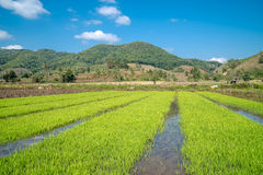 Τοπίο με τους τομείς ρυζιού στη βόρεια Ταϊλάνδη Στοκ Εικόνες