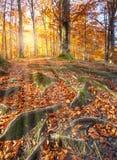Τοπίο με το δάσος φθινοπώρου μπαζούκας Στοκ Εικόνα