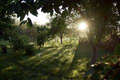 Τοπίο με το δάσος, τα δέντρα και τον ήλιο Στοκ Φωτογραφία