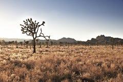Τοπίο με το δέντρο joshua στοκ φωτογραφία με δικαίωμα ελεύθερης χρήσης