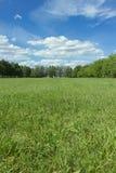 Τοπίο με το μπλε ουρανό και την πράσινη χλόη Στοκ Εικόνες