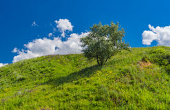 Τοπίο με το μόνο δέντρο ασημένιος-μούρων σε έναν λόφο στην αγροτική ουκρανική περιοχή Στοκ Φωτογραφίες