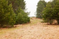 Τοπίο με το πολύβλαστο δέντρο πεύκων στοκ φωτογραφία