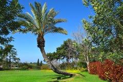 Τοπίο με το φοίνικα στο δημόσιο πάρκο Ramat Hanadiv, Ισραήλ στοκ εικόνες με δικαίωμα ελεύθερης χρήσης
