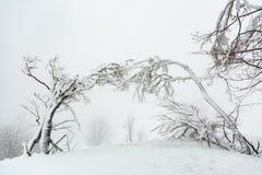 Τοπίο με χιονισμένα και παγωμένα δέντρα Στοκ Εικόνες
