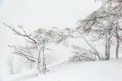 Τοπίο με χιονισμένα και παγωμένα δέντρα Στοκ φωτογραφία με δικαίωμα ελεύθερης χρήσης