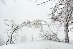 Τοπίο με χιονισμένα και παγωμένα δέντρα Στοκ εικόνα με δικαίωμα ελεύθερης χρήσης