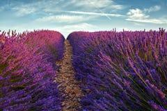 Τοπίο με lavender τον τομέα στην Προβηγκία Στοκ Φωτογραφίες