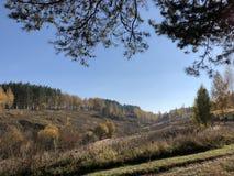 Τοπίο μια ηλιόλουστη ημέρα φθινοπώρου: κιτρινισμένα αεράκια και πεύκα σε μια λοφώδη έκταση στοκ εικόνα