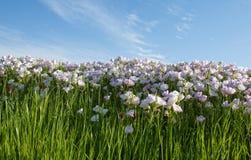 Τοπίο μπλε ουρανού νεραγκουλών Στοκ Εικόνες