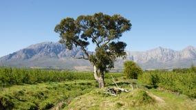 Τοπίο Νότια Αφρική Στοκ Εικόνα