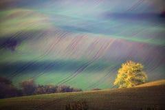 Τοπίο νότιου Moravian με τα δέντρα και τους κυματιστούς πράσινους τομείς το φθινόπωρο Κυματιστοί τομείς στη Δημοκρατία της Τσεχία στοκ φωτογραφία με δικαίωμα ελεύθερης χρήσης
