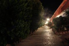 Τοπίο νύχτας με τα δέντρα και τους λαμπτήρες Στοκ εικόνες με δικαίωμα ελεύθερης χρήσης