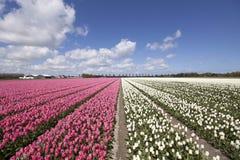 Τοπίο λουλουδιών φύσης Στοκ φωτογραφίες με δικαίωμα ελεύθερης χρήσης