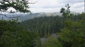 Τοπίο πέρα από το δάσος, βουνά Apuseni, Ρουμανία στοκ εικόνες