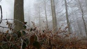 Τοπίο παγετού Στοκ Φωτογραφίες