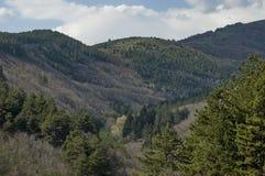 Τοπίο πανοράματος άνοιξης με το πεύκο ή το πεύκο και το αποβαλλόμενο δάσος Στοκ Φωτογραφίες