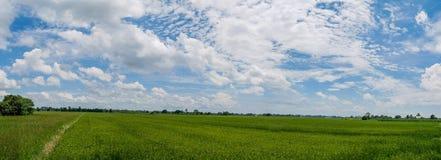 Τοπίο πανοράματος Όμορφο τοπίο του ρυζιού της Jasmine Στοκ εικόνα με δικαίωμα ελεύθερης χρήσης