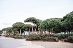 Τοπίο παραλιών της Ισπανίας pineda Λα στοκ εικόνες