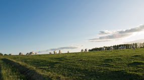 τοπίο πεδίων αγελάδων Στοκ φωτογραφία με δικαίωμα ελεύθερης χρήσης