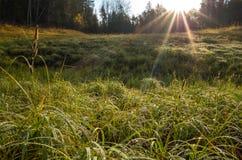 Τοπίο που γίνεται στην ανατολή Πράσινη και κίτρινη χλόη στις πτώσεις δροσιάς που φωτίζονται από το φωτεινό ήλιο αύξησης στοκ εικόνες με δικαίωμα ελεύθερης χρήσης
