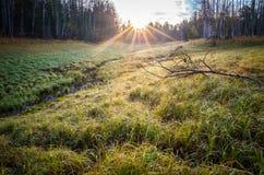 Τοπίο που γίνεται στην ανατολή Πράσινη και κίτρινη χλόη στις πτώσεις δροσιάς που φωτίζονται από το φωτεινό ήλιο αύξησης στοκ φωτογραφίες