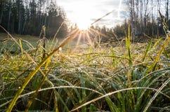 Τοπίο που γίνεται στην ανατολή Πράσινη και κίτρινη χλόη στις πτώσεις δροσιάς που φωτίζονται από το φωτεινό ήλιο αύξησης στοκ φωτογραφία με δικαίωμα ελεύθερης χρήσης