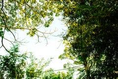 Τοπίο, πράσινο φύλλο στα δέντρα, φύση Στοκ Εικόνες