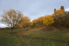 Τοπίο πτώσης με τα κίτρινα δέντρα Στοκ Εικόνα