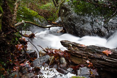 Τοπίο πτώσης στο δάσος με το μεταξωτό μαλακό ποταμό σατέν που ρέει στη μακροχρόνια έκθεση Στοκ Εικόνα