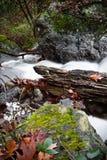 Τοπίο πτώσης στο δάσος με το μεταξωτό μαλακό ποταμό σατέν που ρέει στη μακροχρόνια έκθεση Στοκ φωτογραφίες με δικαίωμα ελεύθερης χρήσης