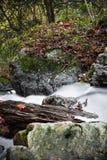 Τοπίο πτώσης στο δάσος με το μεταξωτό μαλακό ποταμό σατέν που ρέει στη μακροχρόνια έκθεση Στοκ Φωτογραφίες