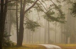 Τοπίο πτώσης το δασικό, misty ομιχλώδες πρωί Στοκ εικόνες με δικαίωμα ελεύθερης χρήσης