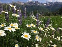 Τοπίο σειράς βουνών με Wildflowers Στοκ Εικόνες