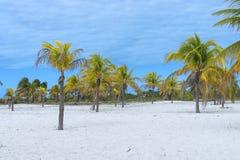 Τοπίο σε μια εξωτική παραλία με τους φοίνικες Στοκ Εικόνα