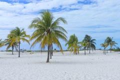 Τοπίο σε μια εξωτική παραλία με τους φοίνικες Στοκ φωτογραφίες με δικαίωμα ελεύθερης χρήσης