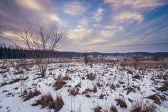 Τοπίο στην περιοχή Podlasie Στοκ φωτογραφία με δικαίωμα ελεύθερης χρήσης
