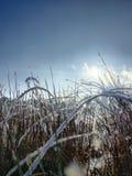 Τοπίο στη χειμερινή νεφελώδη ημέρα των χιονισμένων τομέων και των δασών Στοκ εικόνα με δικαίωμα ελεύθερης χρήσης