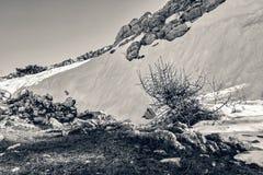 Τοπίο στις πέτρες βουνών, χιόνι, κάτω από το φωτεινό ήλιο, μέσα Στοκ Εικόνες