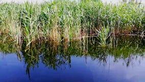 Τοπίο στις του δέλτα βιντεοσκοπημένες εικόνες Δούναβη απόθεμα βίντεο